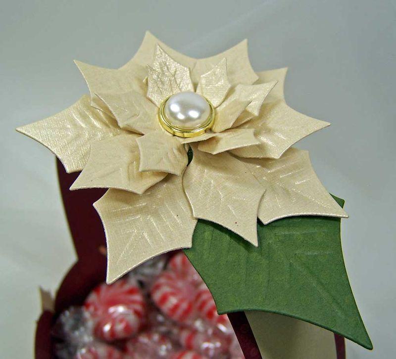 Poinsettia-close-up